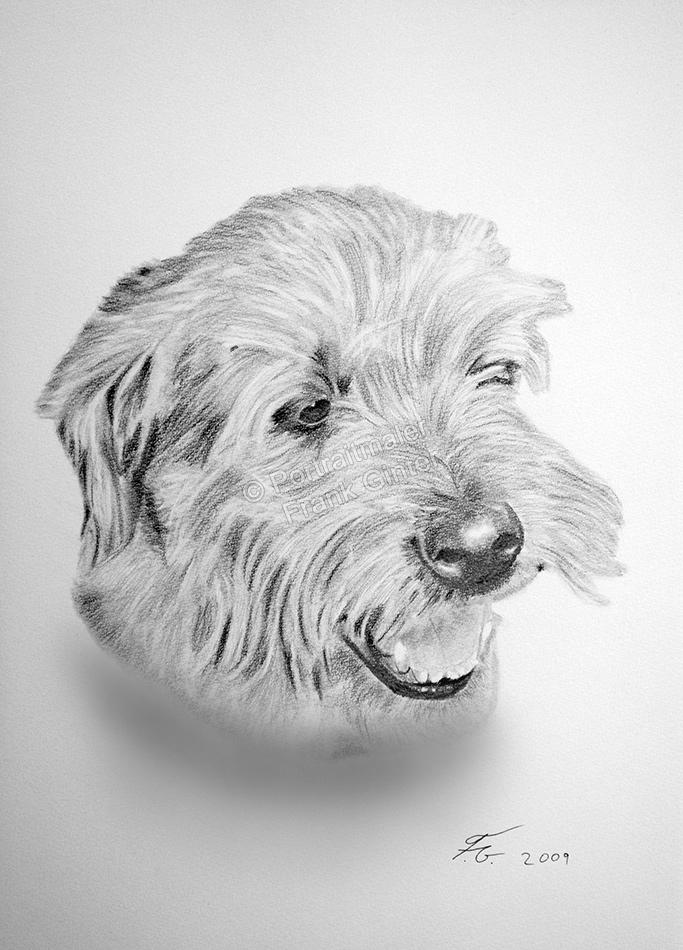 Bleistiftzeichnung vom Hund, Tierzeichnungen, Bleistiftzeichnungen, Tierportraits, Hundeportraits