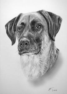 Eine Tierzeichnung - Hundezeichnung mit Bleistift