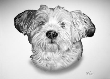 Eine Tierzeichnung - Hundezeichnung mit Bleistift Hundeportrait