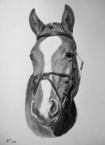 Eine Tierzeichnung - Pferdezeichnung mit Bleistift