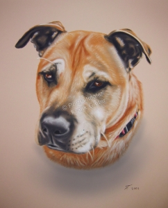 Ein Tier Pastellgemälde - Hundegemälde in Pastell Hundeportrait