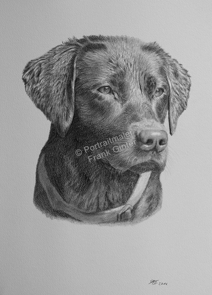 Bleistiftzeichnungen, Tierportraits Hunde Bleistiftzeichnung, Tierzeichnungen, Tierzeichner