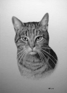 Bleistiftzeichnungen, Tierportraits Katzen Bleistiftzeichnung, Tierzeichnungen, Tierzeichner