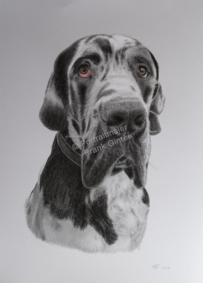 Farbstiftzeichnungen Tierportraits Hunde Farbstiftzeichnung Tierzeichnungen Farbstift Zeichner