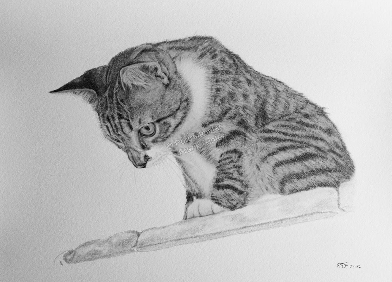 Bleistiftzeichnung, Tierportraits Katzen, Bleistiftzeichnungen, Tierzeichnungen, Katze in Kohle und Bleistift