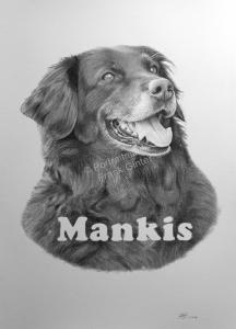 Bleistiftzeichnung – Kohlezeichnung eines Hundes, Tierzeichnungen, Bleistiftzeichnungen, Kohlezeichnungen, Tierportraits, Hunde-Portraits